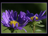 Freshly Bathed by photoimagery, Photography->Flowers gallery