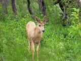 Oh Deer! by kidder, Photography->Animals gallery