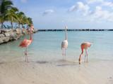 Aruba by ashley28pru, Photography->Birds gallery