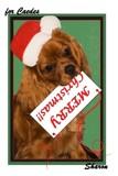 MERRY, MERRY CHRISTMAS! by sharonva, holidays->christmas gallery