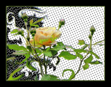 The Yellow Rose With Effects by verenabloo, Photography->Manipulation gallery