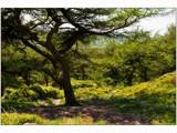 rambling woodland ................ by fogz, Photography->Landscape gallery