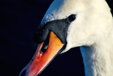 Close-Up by braces, Photography->Birds gallery