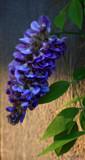 Calendar Garden Lovely by tigger3, photography->flowers gallery