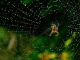 rain spider by Valle, Photography->Insects/Spiders gallery