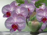 Marilyn's Orchids! by marilynjane, Rework gallery