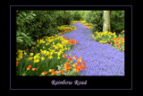 Rainbow Road by jesouris, Photography->Flowers gallery