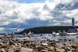 Seagulls on Shoreline by wencele, photography->shorelines gallery