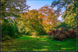 Open Spot In Forest by corngrowth, photography->landscape gallery
