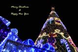 Christmas tree by night by ekowalska, holidays->christmas gallery