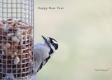 Happy New Year From Woody And Me by tigger3, photography->birds gallery