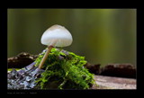 King Of The Hill by kodo34, Photography->Mushrooms gallery