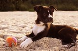 Beach Pup by JaiJoli, photography->animals gallery