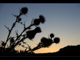 Thistle by gs208103, Photography->Sunset/Rise gallery