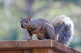 """""""OK Where Are My Peanuts?"""" by icedancer, photography->animals gallery"""