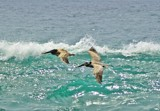Couple Of Surfers by ironcross1977, photography->birds gallery