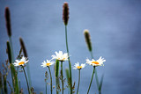 Five plus One by Eubeen, photography->flowers gallery