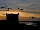 the birds of Essaouira................ by fogz, Photography->Sunset/Rise gallery