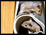 Peek-a-boo! by HanneK, Photography->Animals gallery