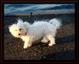 Diamond The Fisherdog! by ohpampered1, Photography->Pets gallery
