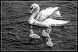 Motherly Care In B&W by corngrowth, contests->b/w challenge gallery