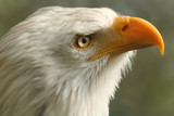 A birds eye by Paul_Gerritsen, Photography->Birds gallery