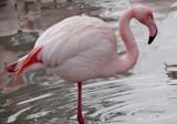 Winter Warmer by gonedigital, photography->birds gallery