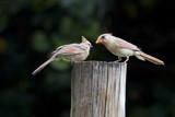 Twosome by jeenie11, photography->birds gallery