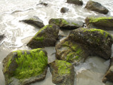 Its all about the slime. by m_koempel, photography->shorelines gallery