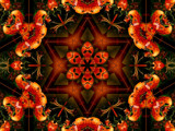 Tiger Lily Star by LynEve, Photography->Manipulation gallery
