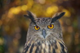 Hoot's watching hoo by RickM, Photography->Birds gallery