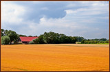 Flax Harvest Time by corngrowth, photography->landscape gallery