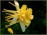 Yellow Bird by trixxie17, photography->flowers gallery