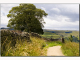 country lane.......... by fogz, Photography->Landscape gallery