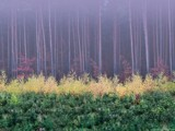 foggy forest morning by jzaw, Photography->Landscape gallery
