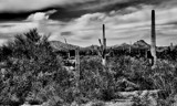 Saguaro Convention by snapshooter87, photography->landscape gallery
