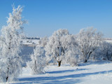 Frosted #2 by Pistos, photography->landscape gallery