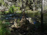 Hillsborough River State Park #11 by muki7, Photography->Landscape gallery