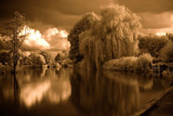 Infra red raw by JQ, Photography->Landscape gallery