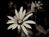 Simplicity by coram9, photography->flowers gallery