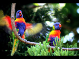 Parrots by isaacp, Photography->Birds gallery