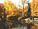 Splintered by jojomercury, photography->landscape gallery