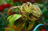 swirls by tee, Photography->Gardens gallery