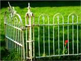Fenced In by 0930_23, photography->flowers gallery