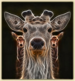 Ghost deer by slybri, photography->manipulation gallery
