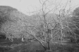 Grayscale Branches by Skynet5, Photography->Landscape gallery