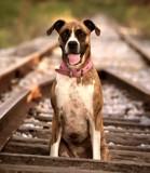 Dog Track by JaiJoli, photography->animals gallery
