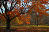 The Glorious Season by Silvanus, photography->landscape gallery