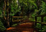 The 39 Steps by biffobear, photography->landscape gallery