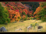 Logan Canyon Autumn Collection #2 by nmsmith, Photography->Landscape gallery